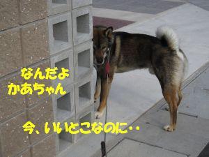 f0143123_2031738.jpg