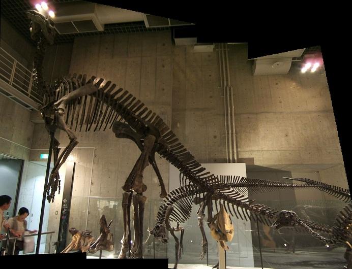 恐竜の骨格標本(上野科博)その1_e0089232_2222970.jpg
