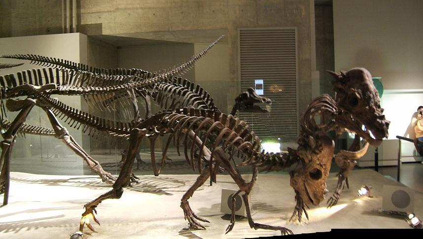 恐竜の骨格標本(上野科博)その1_e0089232_2224359.jpg