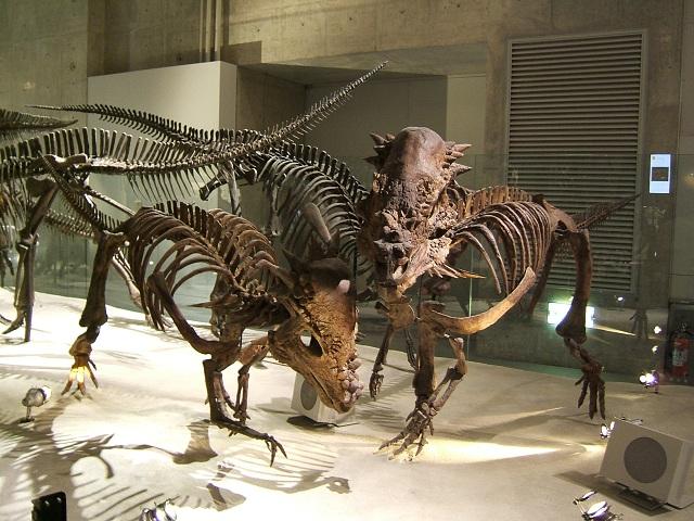 恐竜の骨格標本(上野科博)その1_e0089232_22244186.jpg