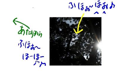 b0165336_1652267.jpg