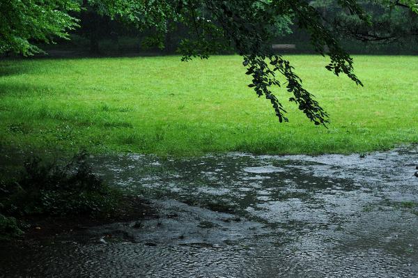 Rain Fall Down_a0003650_2218818.jpg