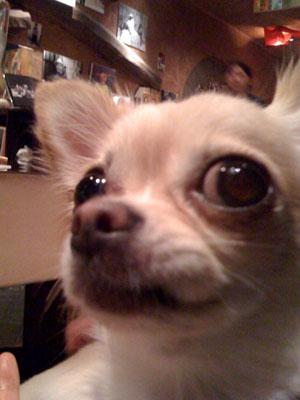 10歩に1犬>>>縁縁_f0196753_221319.jpg