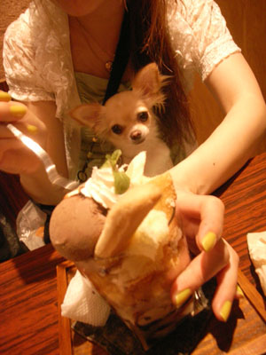 10歩に1犬>>>縁縁_f0196753_2222094.jpg