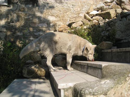 礼儀正しい野良犬のシロキチ君_f0037264_14345690.jpg