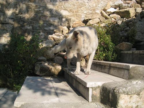 礼儀正しい野良犬のシロキチ君_f0037264_14353858.jpg