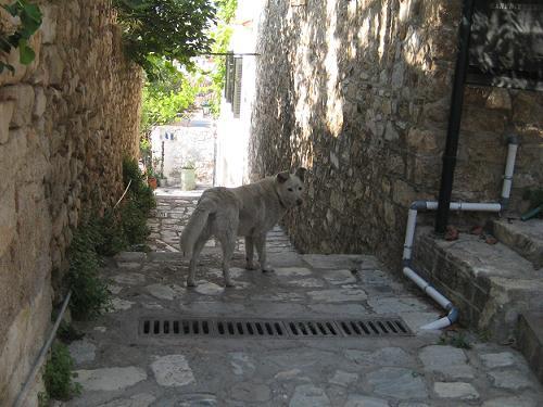 礼儀正しい野良犬のシロキチ君_f0037264_14384246.jpg