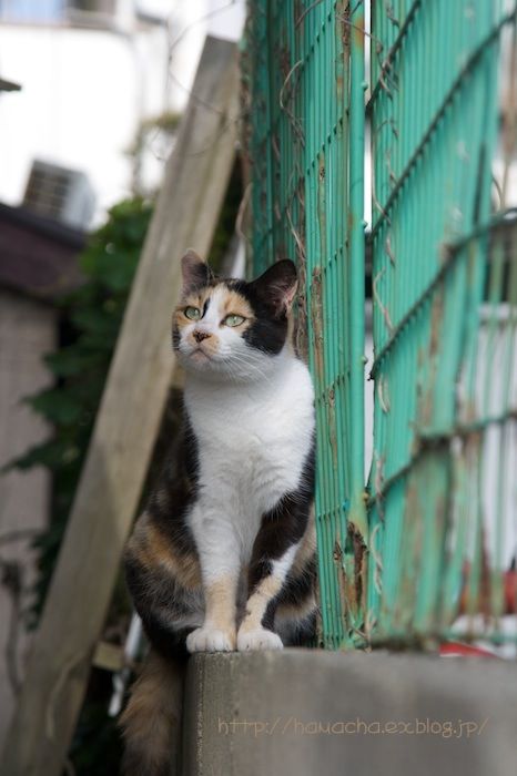 Cats in Shonan #30_c0158775_19394061.jpg