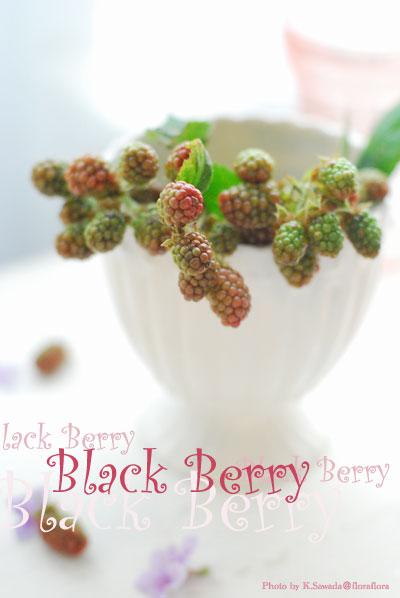ブラックベリーの季節_a0115684_1733668.jpg