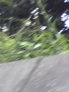 0905202.jpg