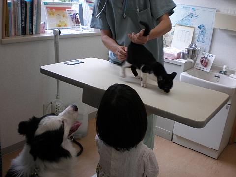 動物病院_e0145995_8532541.jpg