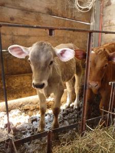 GASのおつかいで高原の有機農家へ_f0106597_3455554.jpg