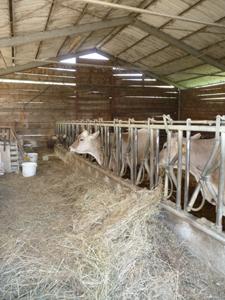 GASのおつかいで高原の有機農家へ_f0106597_38276.jpg