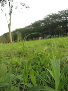 ふじみ野市 福岡中央公園 開園☆_d0080906_1943759.jpg