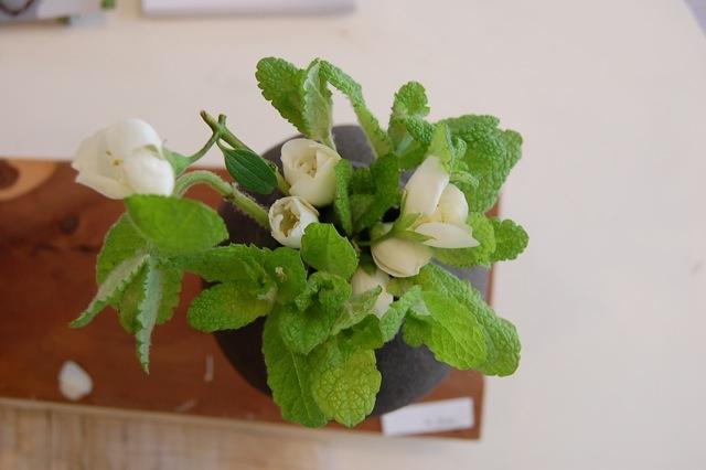 今日、最後の花活けを楽しみました。_a0112812_23124354.jpg