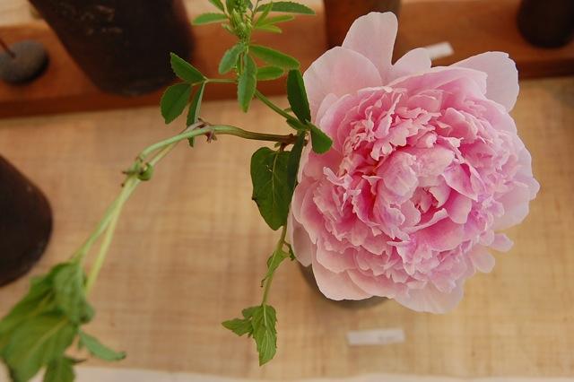 今日、最後の花活けを楽しみました。_a0112812_2352148.jpg