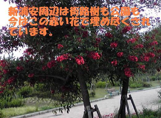 f0121712_16292578.jpg