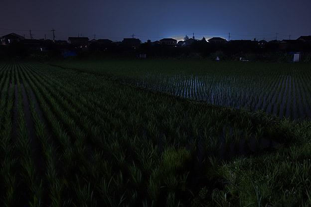 夜の田んぼ_b0010915_2242969.jpg