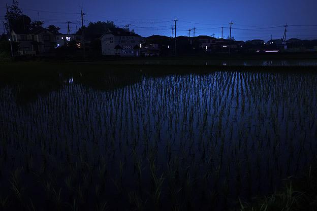 夜の田んぼ_b0010915_22443715.jpg
