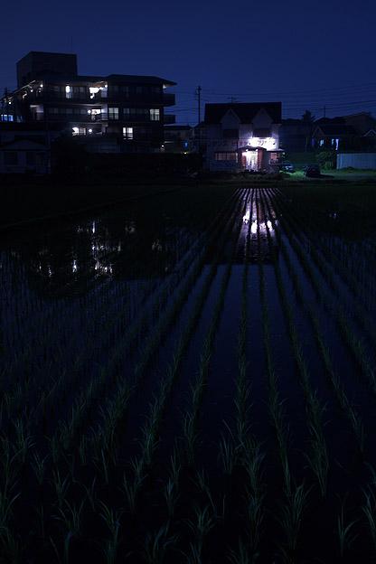 夜の田んぼ_b0010915_2245388.jpg