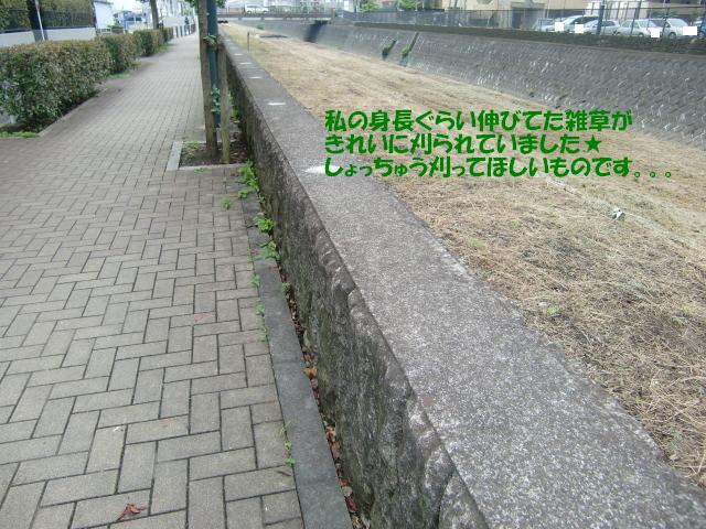 f0182121_9542348.jpg