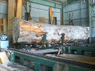 モミの木 製材_c0124828_13523475.jpg