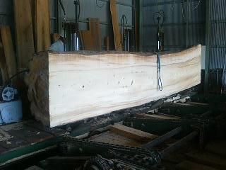 モミの木 製材_c0124828_1352474.jpg