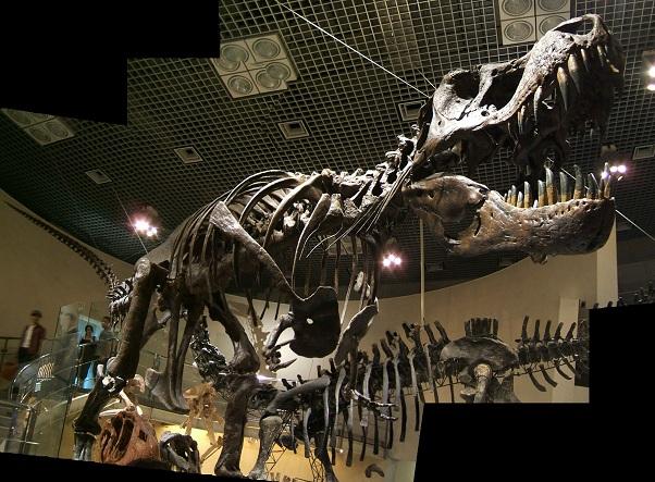 恐竜の骨格標本(上野科博)その2_e0089232_20365445.jpg