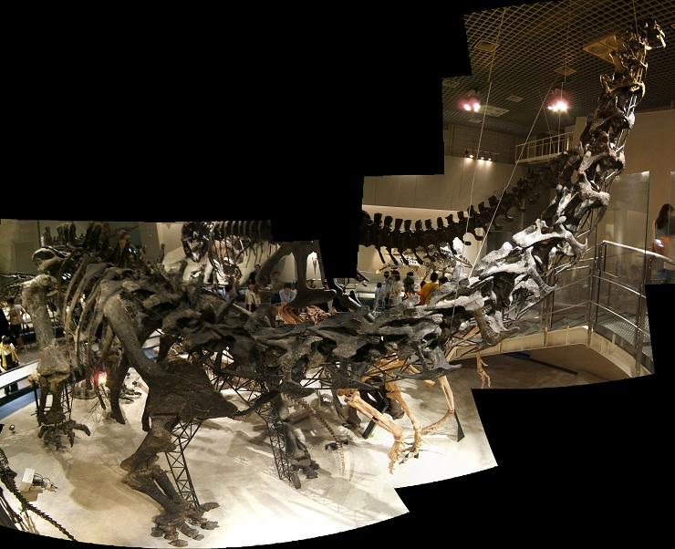 恐竜の骨格標本(上野科博)その2_e0089232_20402518.jpg