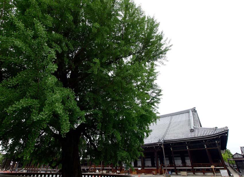 西本願寺-Ⅱ   京都_d0149245_1765744.jpg