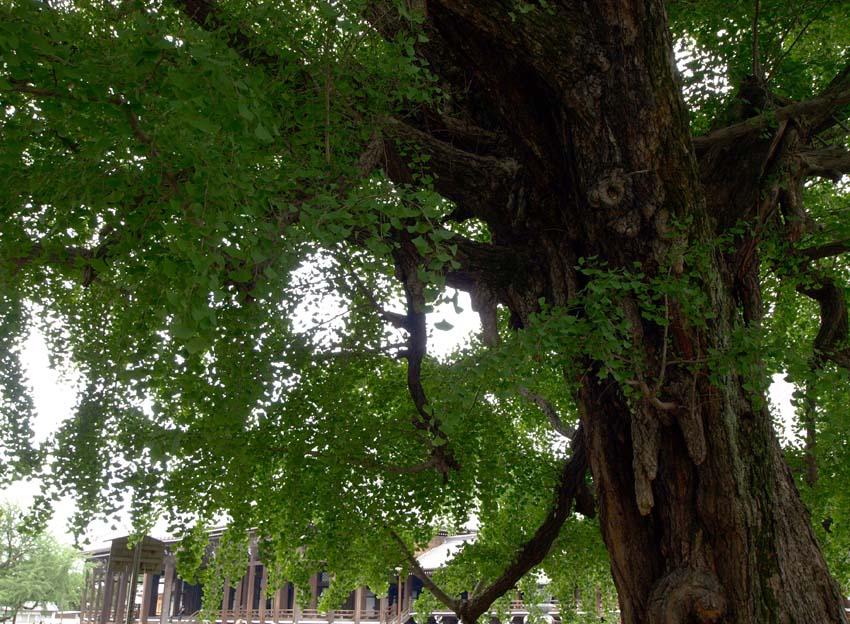 西本願寺-Ⅱ   京都_d0149245_1771250.jpg