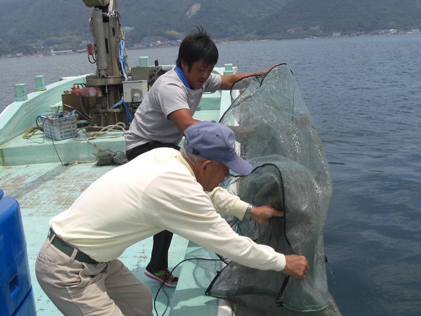 アマモの群生に稚魚の放流 by三津口湾_e0175370_16541727.jpg