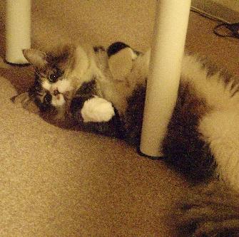 猫のひらき シルキーピクスで現像_a0002672_1182153.jpg