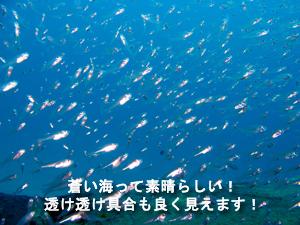 f0144385_1825731.jpg