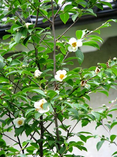 法金剛院-花の寺_e0048413_21261927.jpg