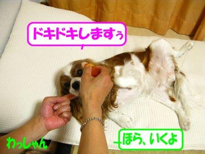 b0185323_16505711.jpg