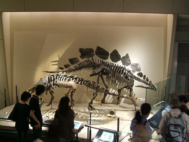 恐竜の骨格標本(上野科博)その3_e0089232_151412.jpg
