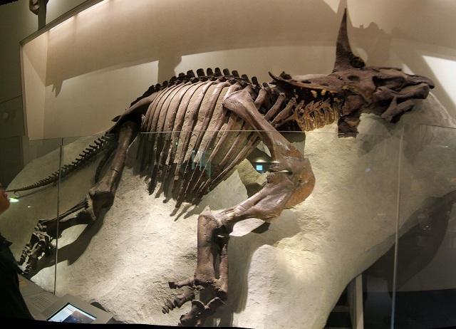 恐竜の骨格標本(上野科博)その3_e0089232_15659.jpg