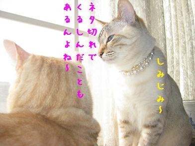 b0151748_13503259.jpg