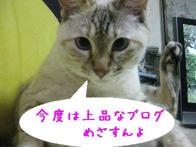 b0151748_1351814.jpg
