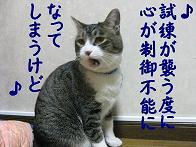 b0151748_1413857.jpg