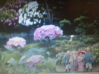 梅雨に咲く紫陽花私的名所ナビΦ_e0009056_8303126.jpg