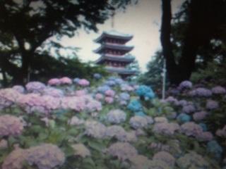 梅雨に咲く紫陽花私的名所ナビΦ_e0009056_8303180.jpg