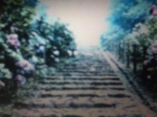 梅雨に咲く紫陽花私的名所ナビΦ_e0009056_8303181.jpg