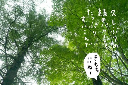f0170072_1195546.jpg