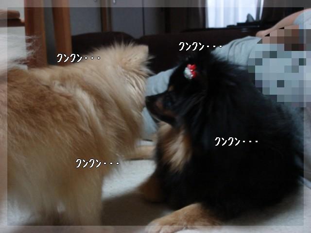 b0078073_19474476.jpg
