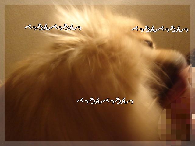 b0078073_2063636.jpg