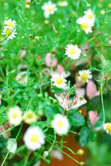 ガーデンカフェグリーンローズにて_a0115684_3261816.jpg