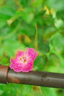 ガーデンカフェグリーンローズにて_a0115684_327773.jpg