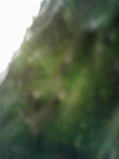 f0115787_2493954.jpg